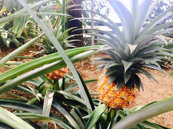 Yume no Shima Tropical Greenhouse Dome: 夢の島熱帯植物館