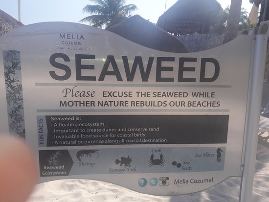 Quick explanation about the seaweed and its importance  - Picture of