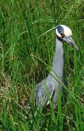 Pasadena, Teksas: Cool bird at Armand Bayou Nature Center