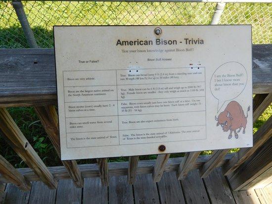 Pasadena, TX: Bison trivia