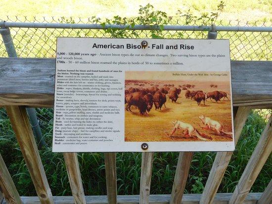 Pasadena, TX: Bison info