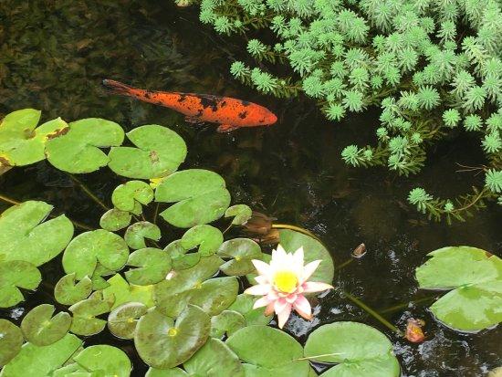 Picture of jardin botanico lankester cartago for Jardin lankester