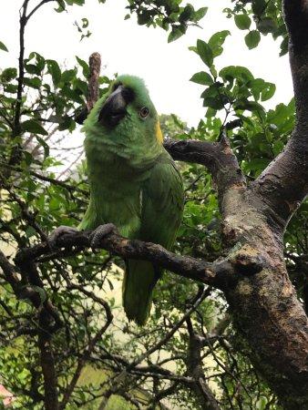 Posada Rio Celeste La Amistad: photo1.jpg