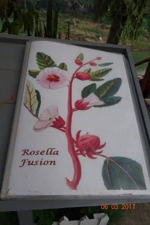 Rosella Fusion Restaurant: Menükarte, nett gemacht