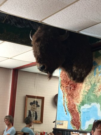 O.K. Cafe : The buffalo