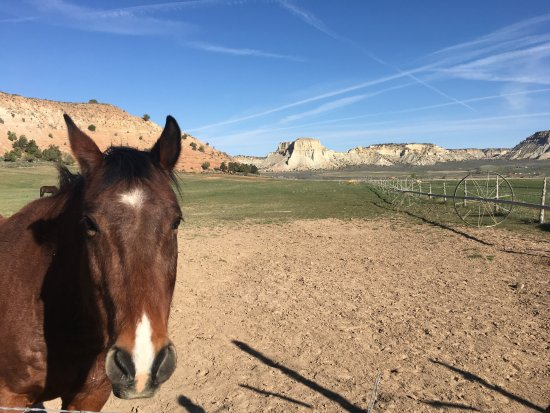 Bryce Canyon Inn: We loved seeing the horses each day