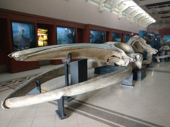 Museo Argentino de Ciencias Naturales Bernardino Rivadavia: Detalhe do acervo