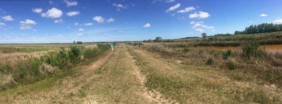 Hardeeville, ساوث كارولينا: Levee between old rice fields