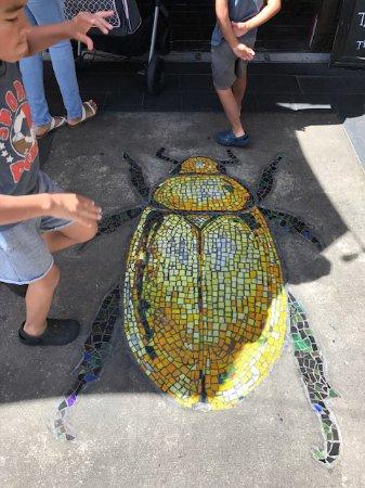 Atlantic Beach, FL: Cute beetle,