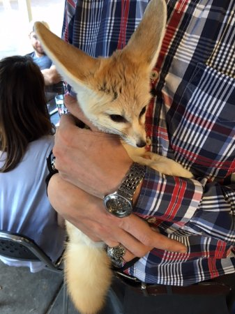 blu on the avenue: Oh, yeah. There's a guy that owns a young pet fox that wanders by.
