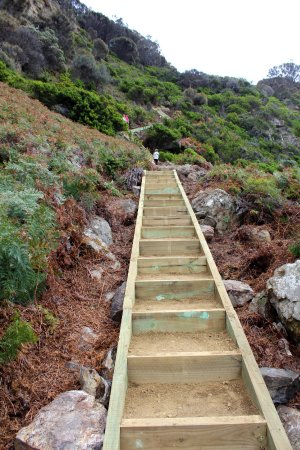 New steps leading down to the beach at Shipstern Bluff