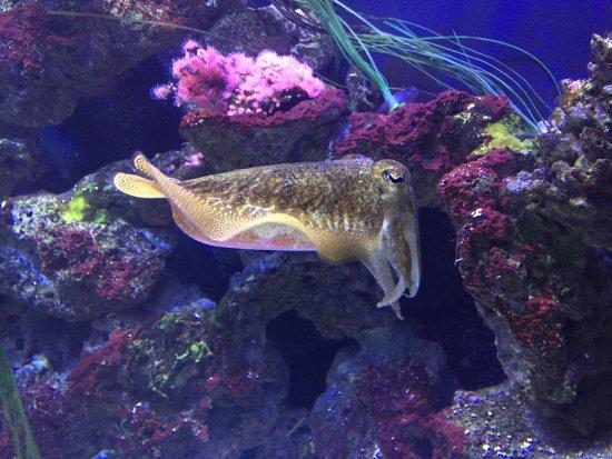 Sea Life Aquarium Picture Of Sea Life Aquarium Carlsbad