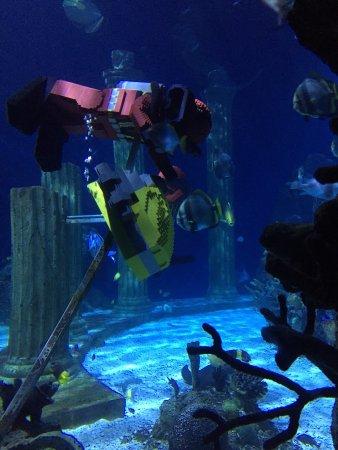 Sea Life Aquarium Carlsbad Ca Top Tips Before You Go