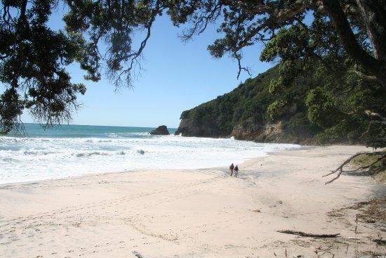 Waihi Beach, New Zealand: Under the trees at Orakawa Bay - Barry Jesney