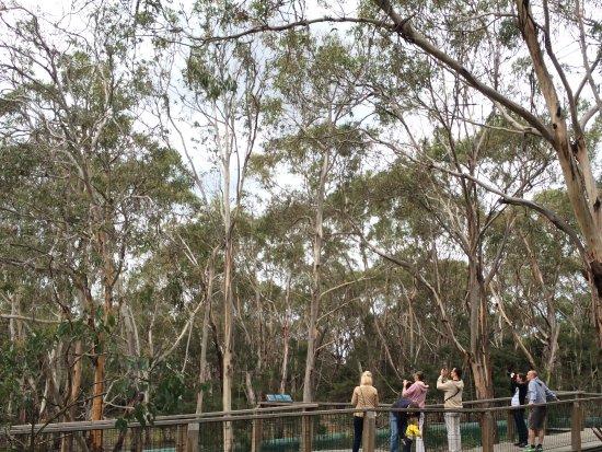 Cowes, ออสเตรเลีย: Boardwalking