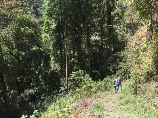Chirripo National Park, كوستاريكا: edge of the forest on the way to Vulture Rock