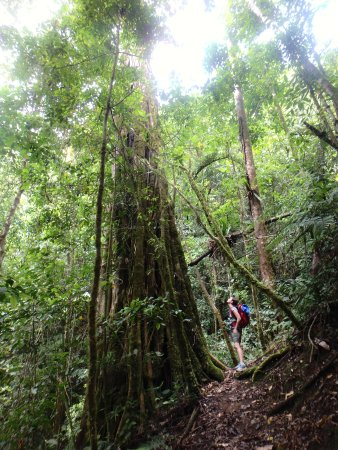 Chirripo National Park, Costa Rica: Forest Giants