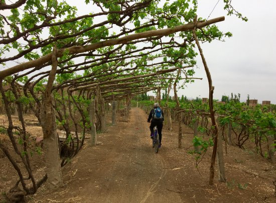Turpan, Chiny: Cycling out into the vines