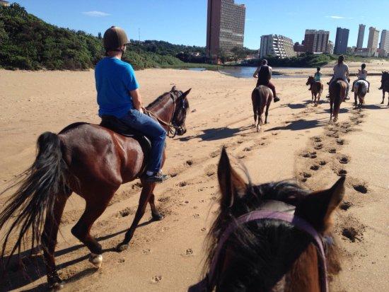 Gary's Horses