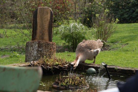 Souesmes, Francia: Le Moulin d'en Bas - Jardin