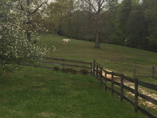 Landrum, Carolina del Sur: photo0.jpg