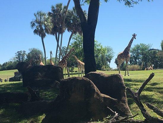 Serengeti Picture Of Busch Gardens Tampa Tampa