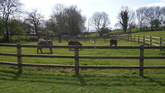 Athlone, Irlanda: Glendeer Pet Farm