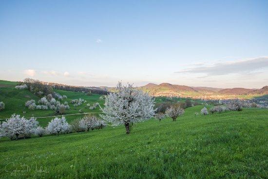 Hotel Platanenhof: Um diese Kirschbäume zu sehen, muss man ein bisschen den Hügel rauf laufen