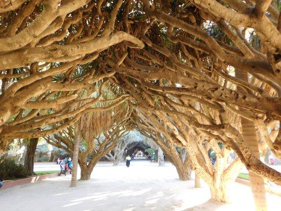 Alger, Argelia: Парк