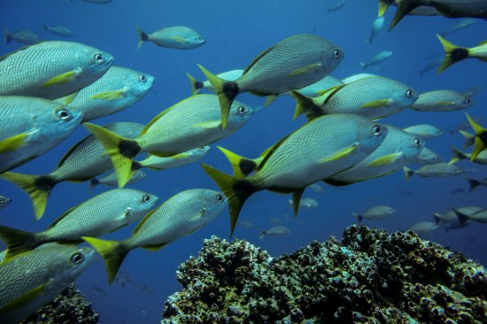 Osa Peninsula, Costa Rica: Réserve de Cano Island