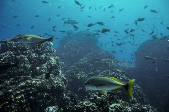 Osa Divers: Autour de Cano Island