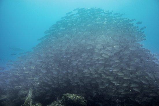 """Osa Divers: Le site """"Aquarium"""" porte bien son nom"""