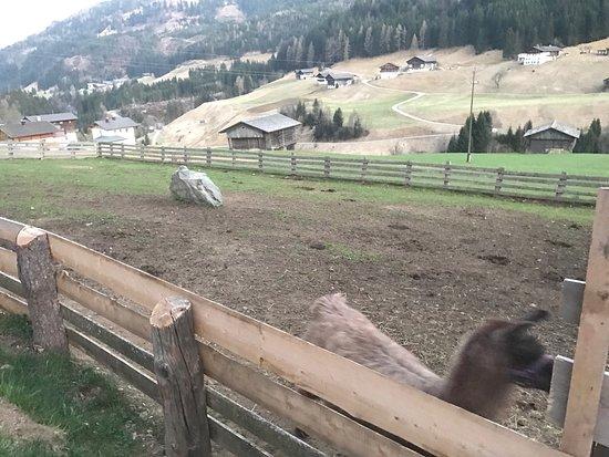 Maria Luggau, Österreich: Bauernhof im Wiesengrund