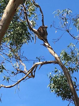 Cowes, Αυστραλία: photo0.jpg