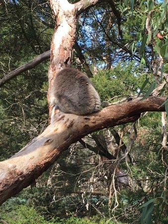Cowes, Αυστραλία: photo1.jpg