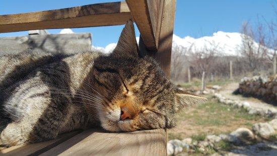 Camardi, Türkei: Aladağlar Camping Bungalow
