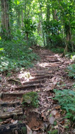 Northern Forest Reserve, Dominica: Stairway up