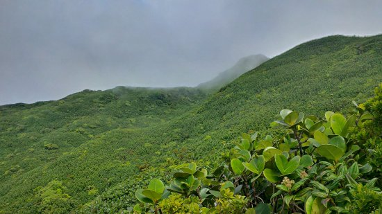 Northern Forest Reserve, Dominica: View from the top