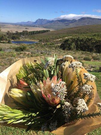 Stanford, Güney Afrika: HaesFarm