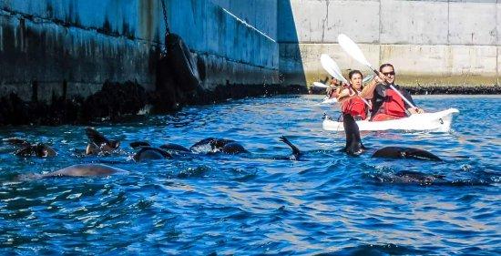 Kayak Cape Town: FB_IMG_1492435544434_large.jpg