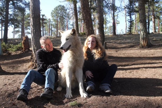 Divide, CO: Got to sit with the 11month old puppy (Yes Artic Wolf Puppy)