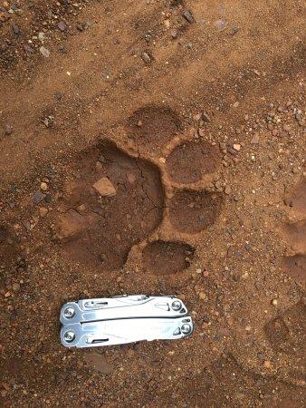 Amakhosi Safari Lodge: photo8.jpg