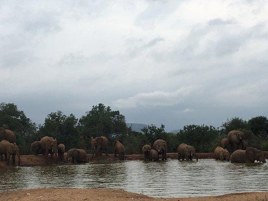 艾馬科西野生動物園旅館張圖片