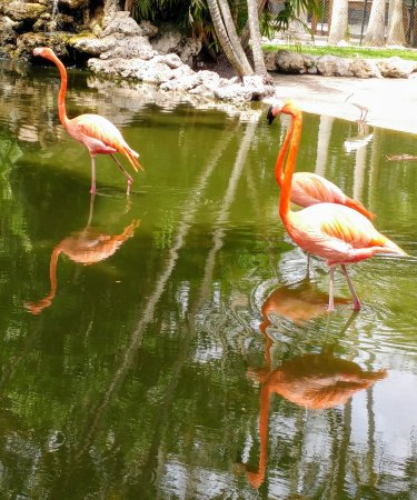 Flamingo Gardens Davie FL Top Tips Before You Go TripAdvisor