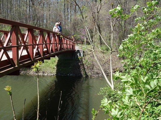 Ellicott City, MD: Many Bridges, many Turtles!