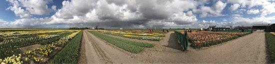 Julianadorp, The Netherlands: Floratuin 17 april