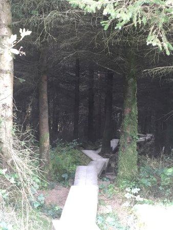 Kinnitty, Irlandia: photo1.jpg