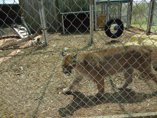 Weston, Flórida: Glad there was a fence