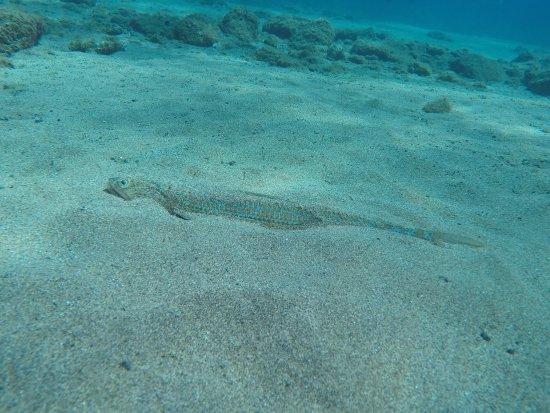 Windblue Diving: Superbes plongées