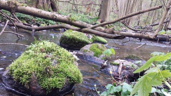Bad Stuer, Tyskland: Bärenwald bach richtung Plauer See